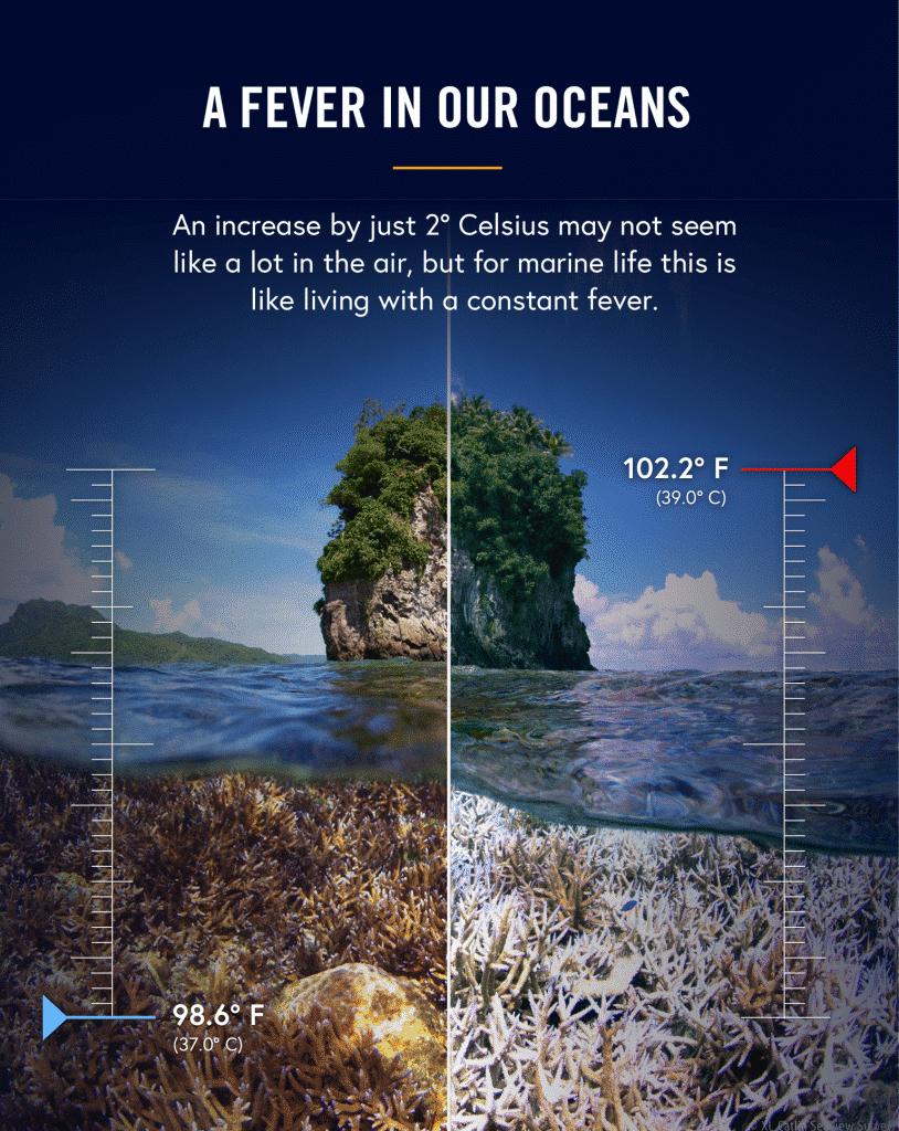 1. Coral Fever-fahrenheit