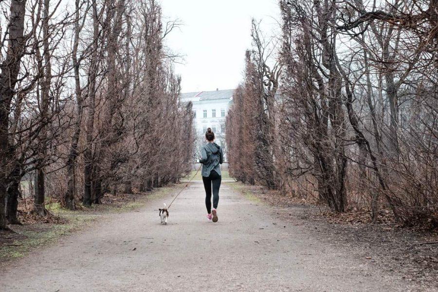 Laufen Meditation Augarten