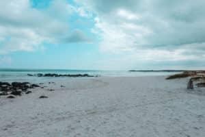 Yoga & Juliet, Galapagos, Santa Cruz, Tortugas Beach, Echse, Iguana