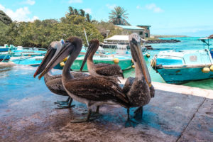 Yoga & Juliet, Galapagos, Santa Cruz, Beach, Fischmarkt, Seelöwe, Pelikan