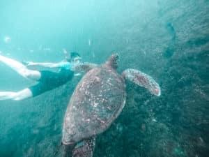 yogaandjuliet Galapagos tauchen Schildkröte schnorcheln