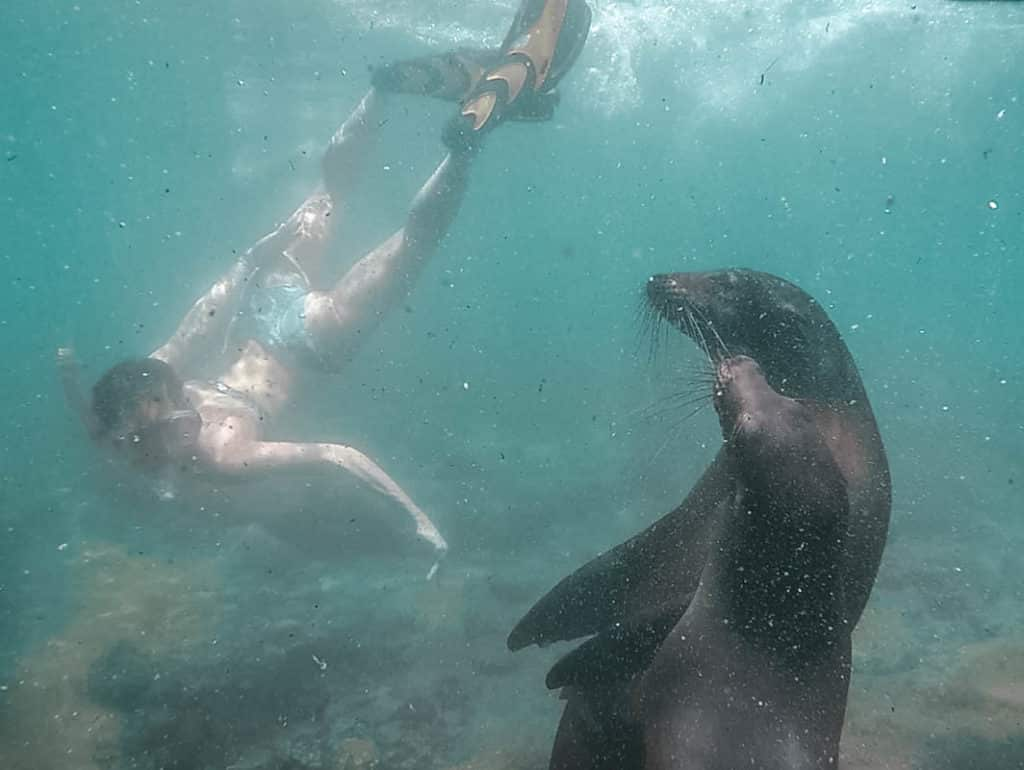 yogaandjuliet Galapagos tauchen Seelöwen schnorcheln