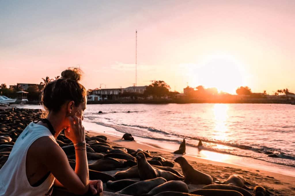 Yoga & Juliet, Galapagos, San Cristobal, Beach, 360 Tour, Seelöwe, Sonnenuntergang
